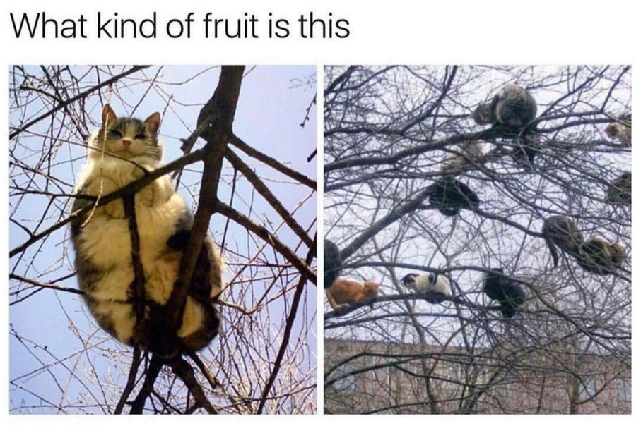 Bopindis Voomo Hident. . v/)/ of fruit is; this. those look like apricats to me