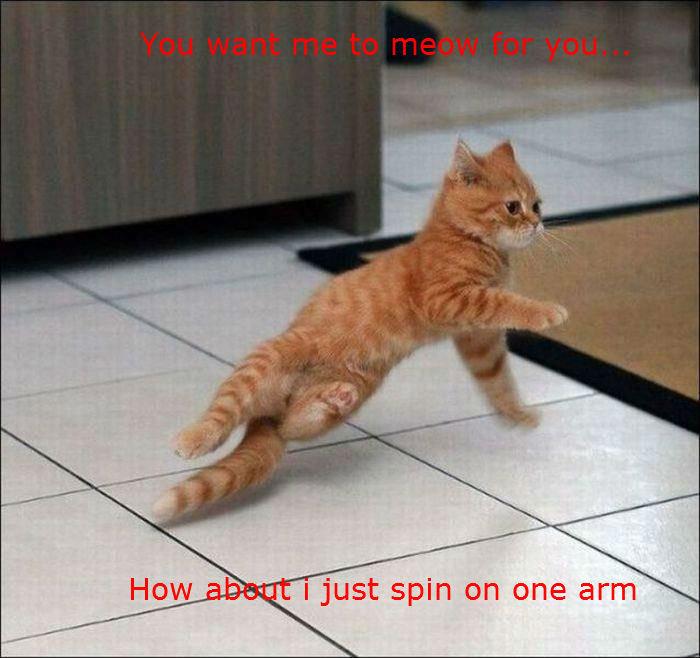 Breakdancing cat. .