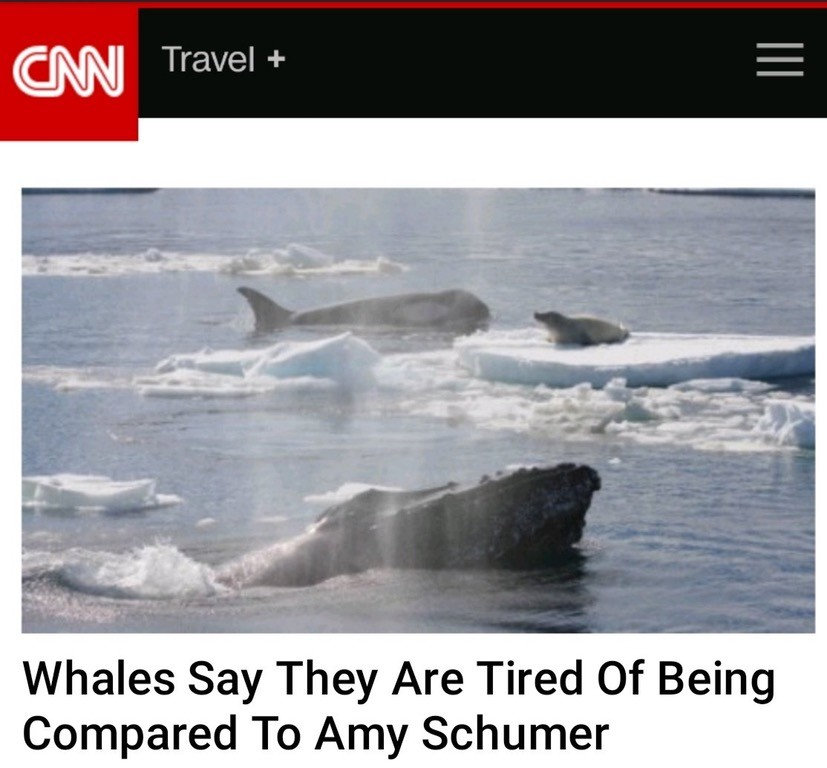 Breaking News. . Whales Say They Are Tired Of Being Compared To ' Schumer