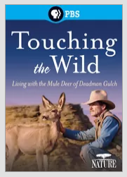 Browsing netflix when. Browsing Netflix when this showed up. W PBS To aching tdn)/ ild. White tail deer