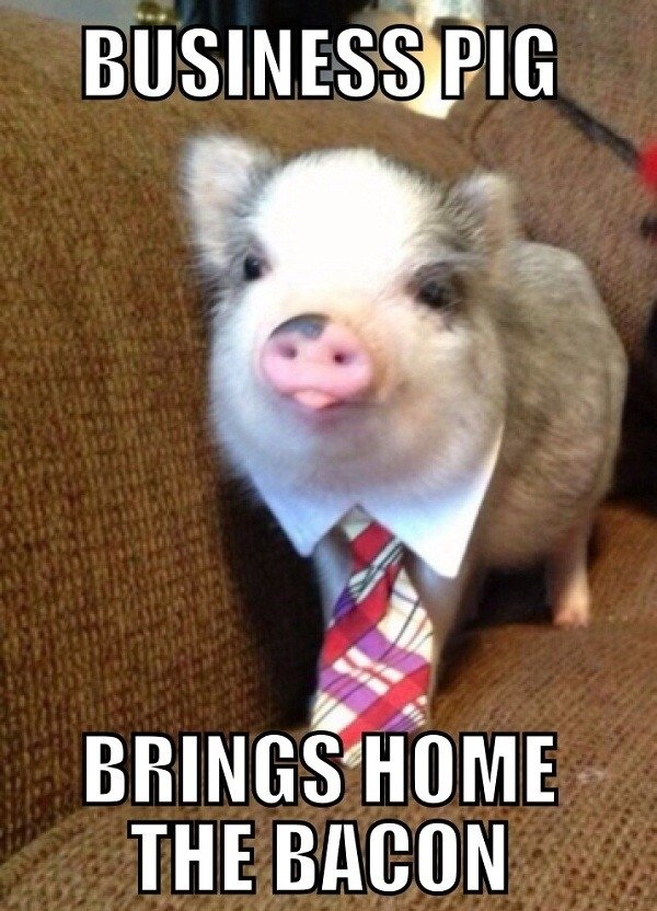 Business pig. . m BACON