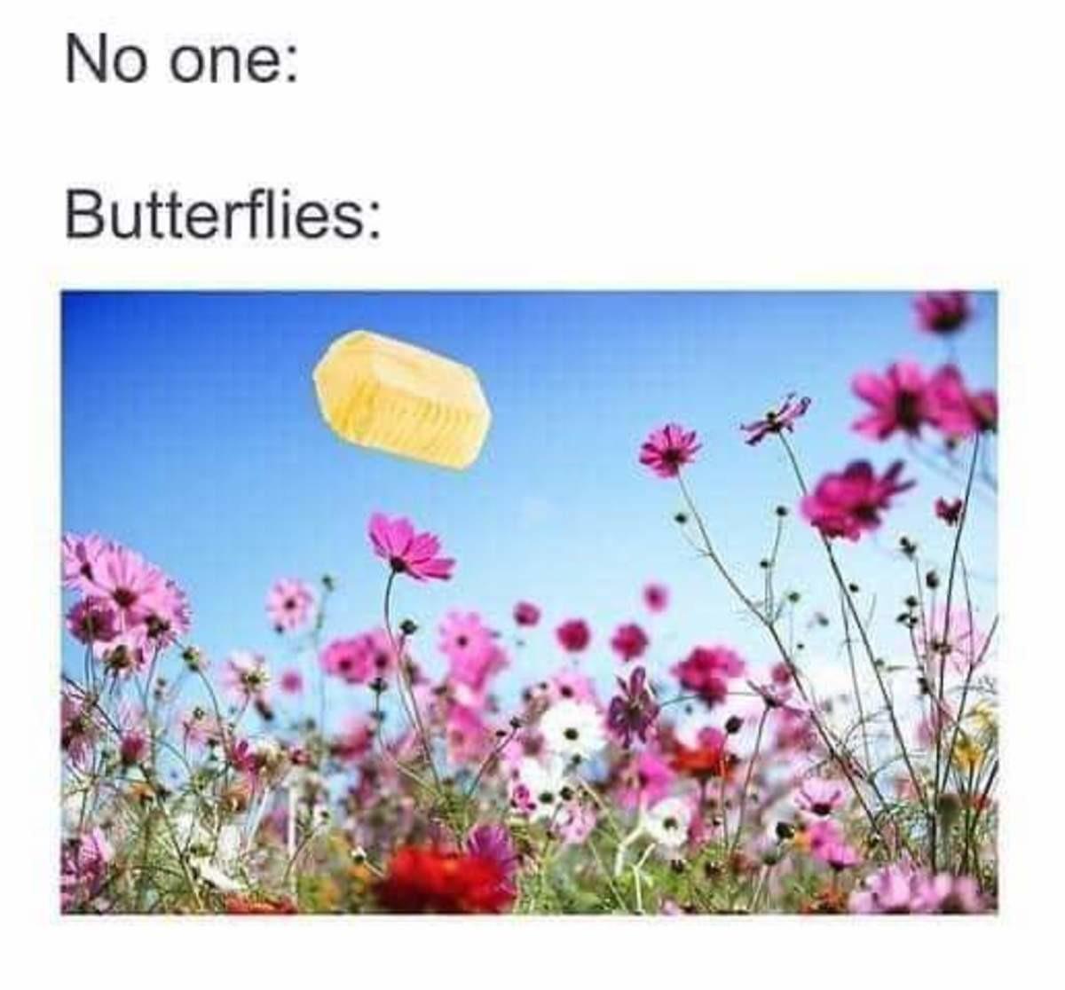 Butterflies. .