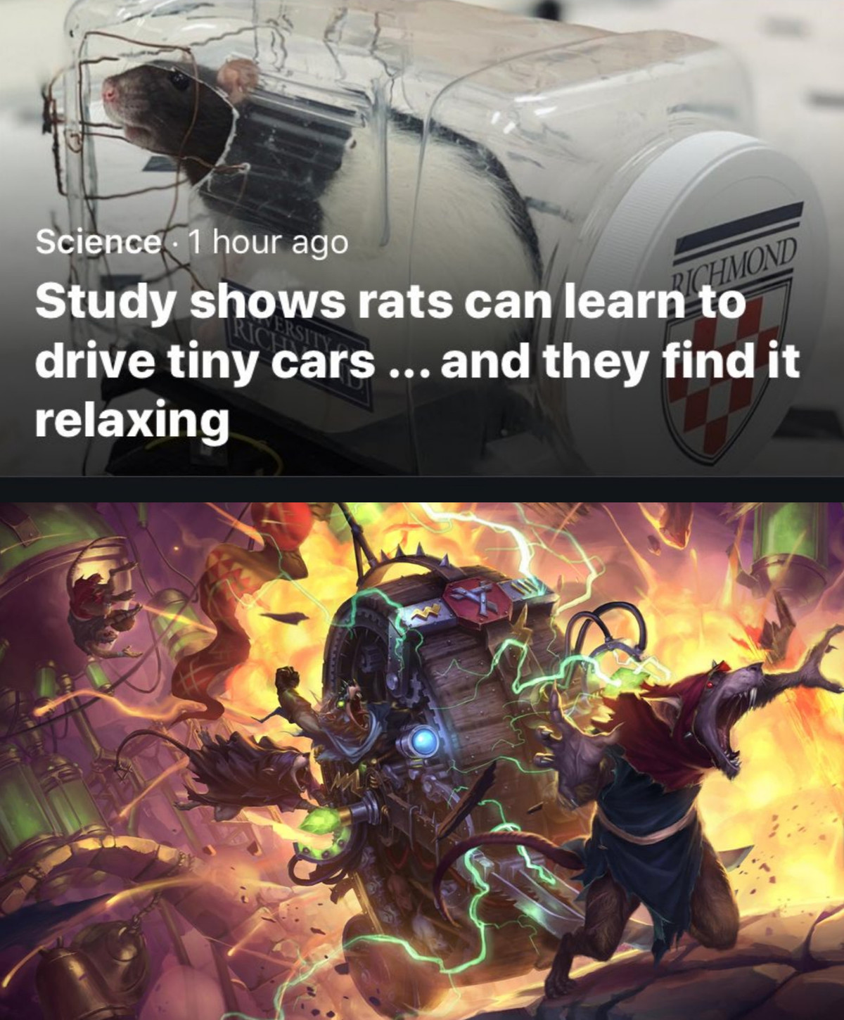CAR-CAR GO FAST. .. Brb, gonna get a rat to be my designated driver from now on