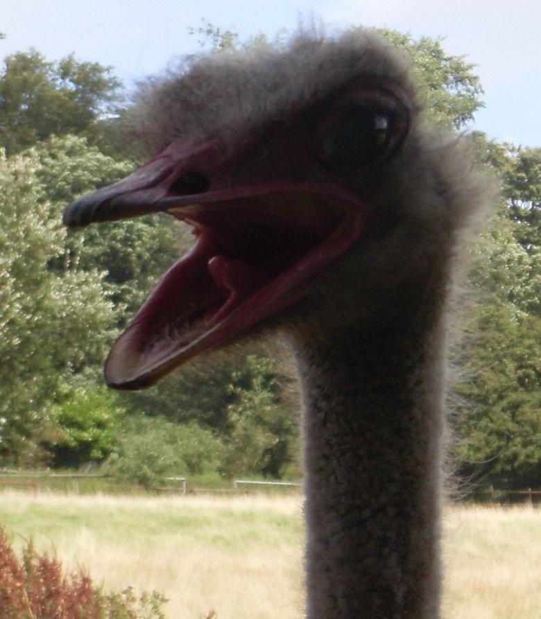 CAW. CAW.. bird's like YOU SAY, BITCH!! HUH? YOU BIG? HUH? YOU FEELIN TOUGH, BITCH!