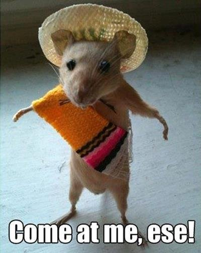 Come at me bro!. . ani-. Speedy Gonzales?