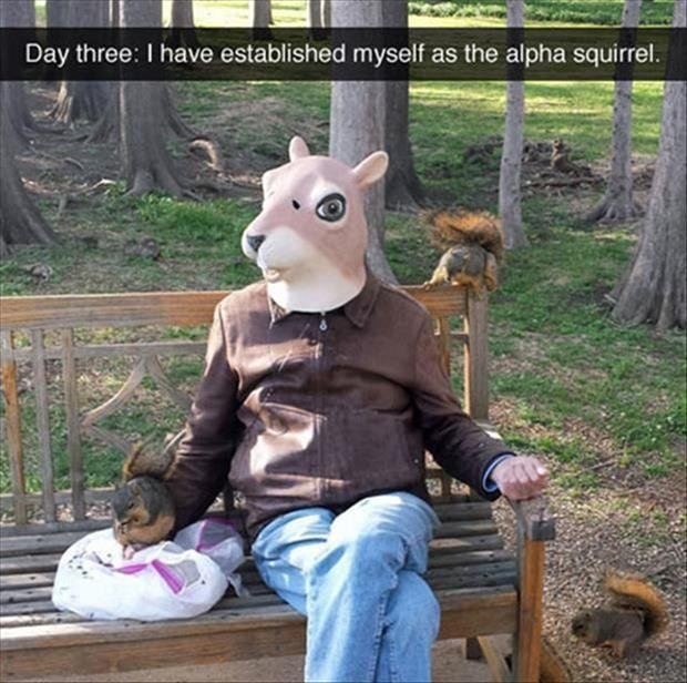 control the nuts, control the universe. Source: dumpaday. Day three' I have established myself as the alpha squirrel. Iwl.. do you get yer choice of the squirrel females