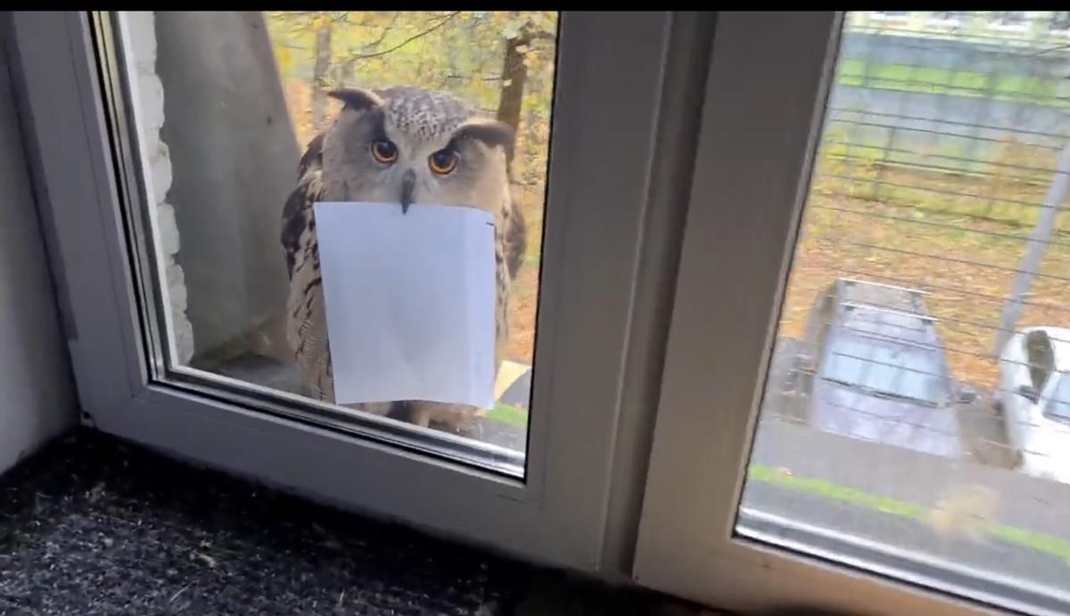Could this be it?. .. Inside is a notice from the home owners association reminding you to install screens on your windows