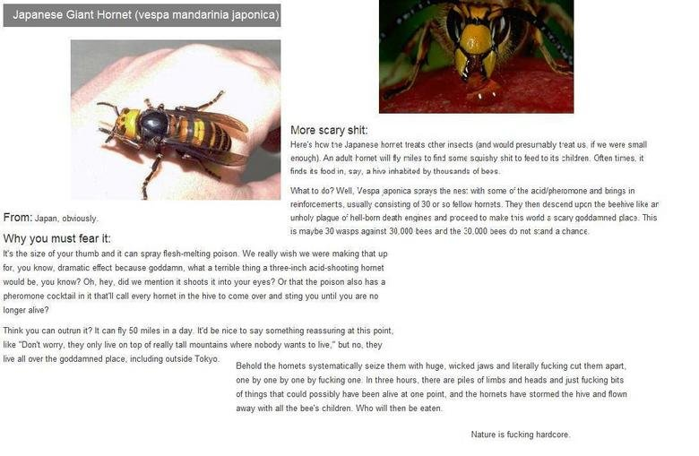 Damn nature you scary!. Seriously, I'm gonna dream about Hornets... your source for scary and weird ...