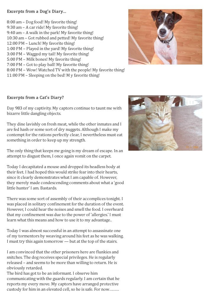 DOG VS. CAT. email i got thought it was funny.. repost...