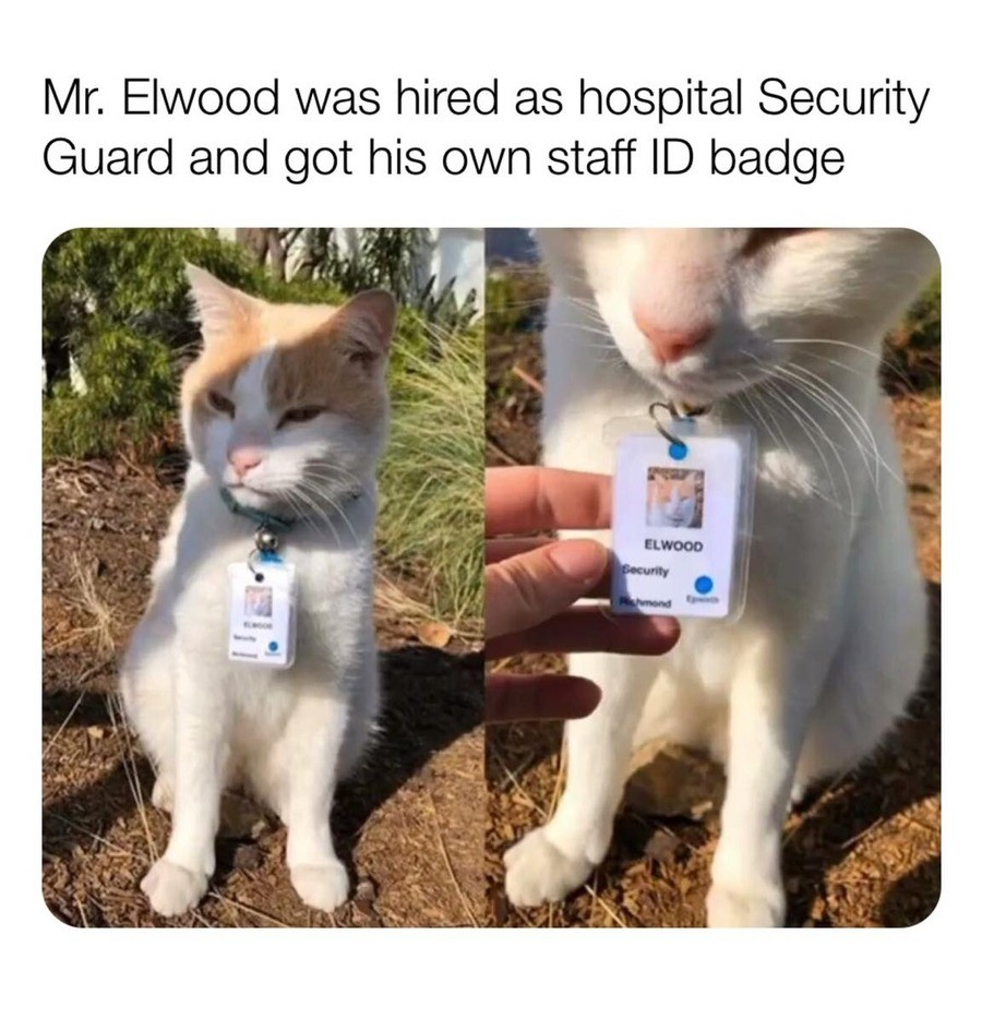 """endangered inexpensive opportunist Curlew. .. From the expression of the cat, I'd say he damn-well knows it, too. """"Giving me pets? Trying to bribe me? ...sure, go ahead. I'll still scratch the hell out"""