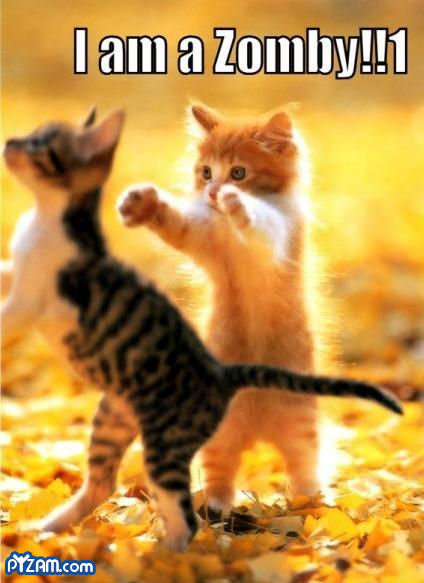 Epic cuteness :p. Kitten zomies ftw. The game..