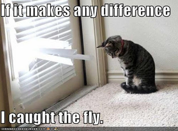 Fly. Source: dumpaday.