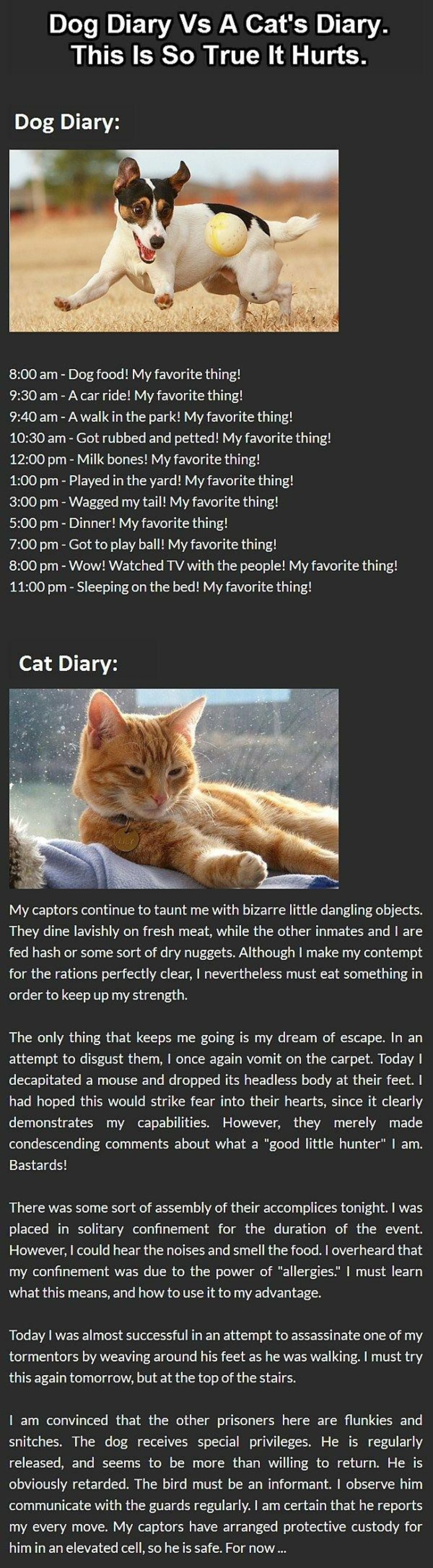 """Funny: Cat Vs Dog Diary. join list: CuteKitty (401 subs)Mention Clicks: 14247Msgs Sent: 121216Mention History join list:. """"He is obviously retarded"""""""