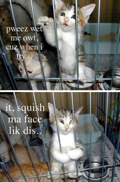funny cat. .. this is borderline animal cruelty not funny