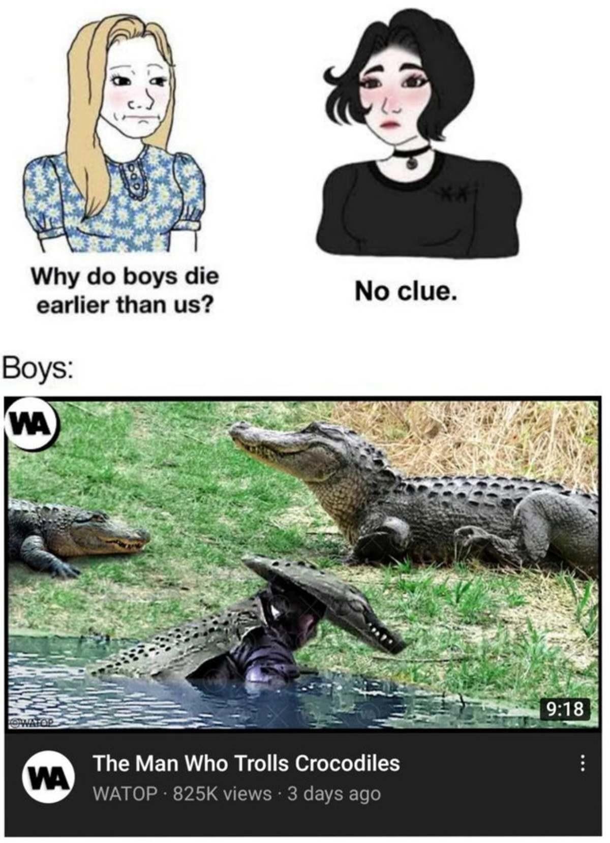 gay Kookabura. .. Of all the animals to troll...