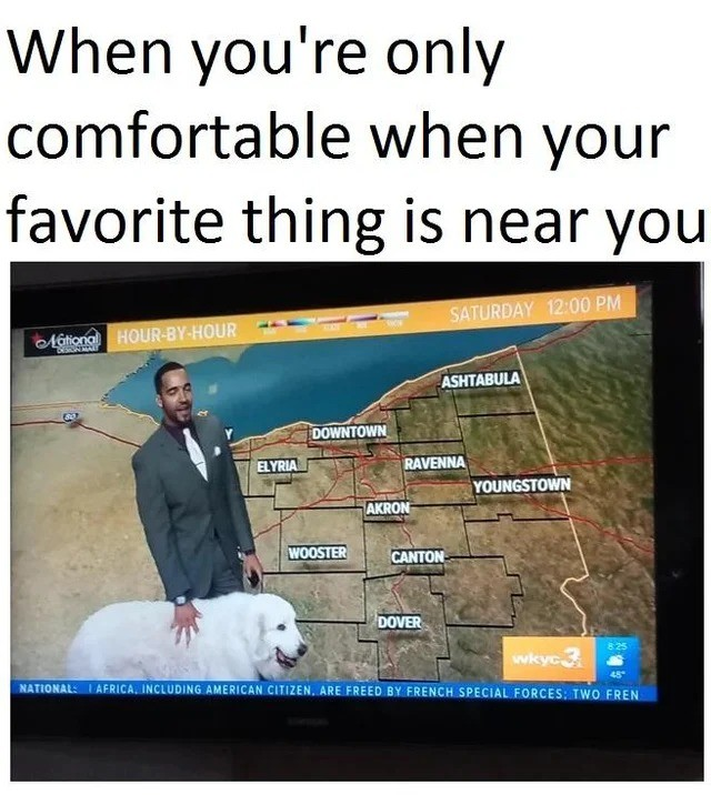 GOOD BOY. .. Which part of Ohio has been released from the curse such as to allow a dog to present the weather.