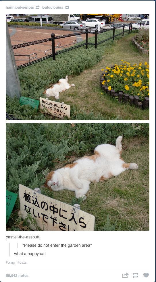 "Happy Cat. . Please {in net enter the garden area"" when w hep: -my can"