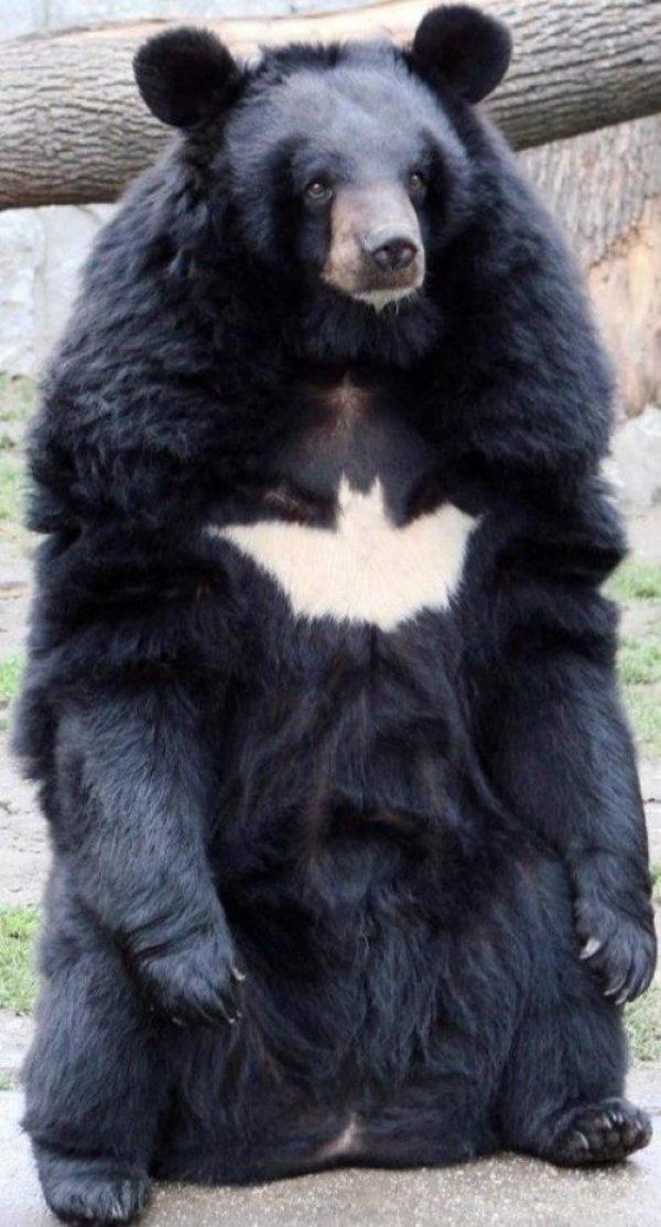 Hero. He is the hero Gotham deserves….. I am the hero that Gotham deserves