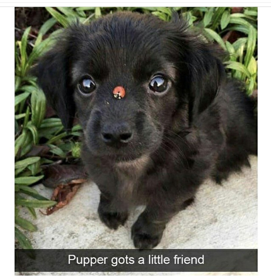 Hi buddy. join list: WholesomeStuff (2339 subs)Mention History. Piper ts a Jiri; friend. A lady bug landing on you is good luck.
