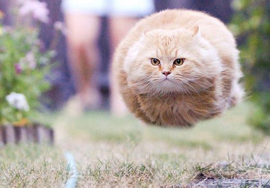 HOVERBALL CAT. .