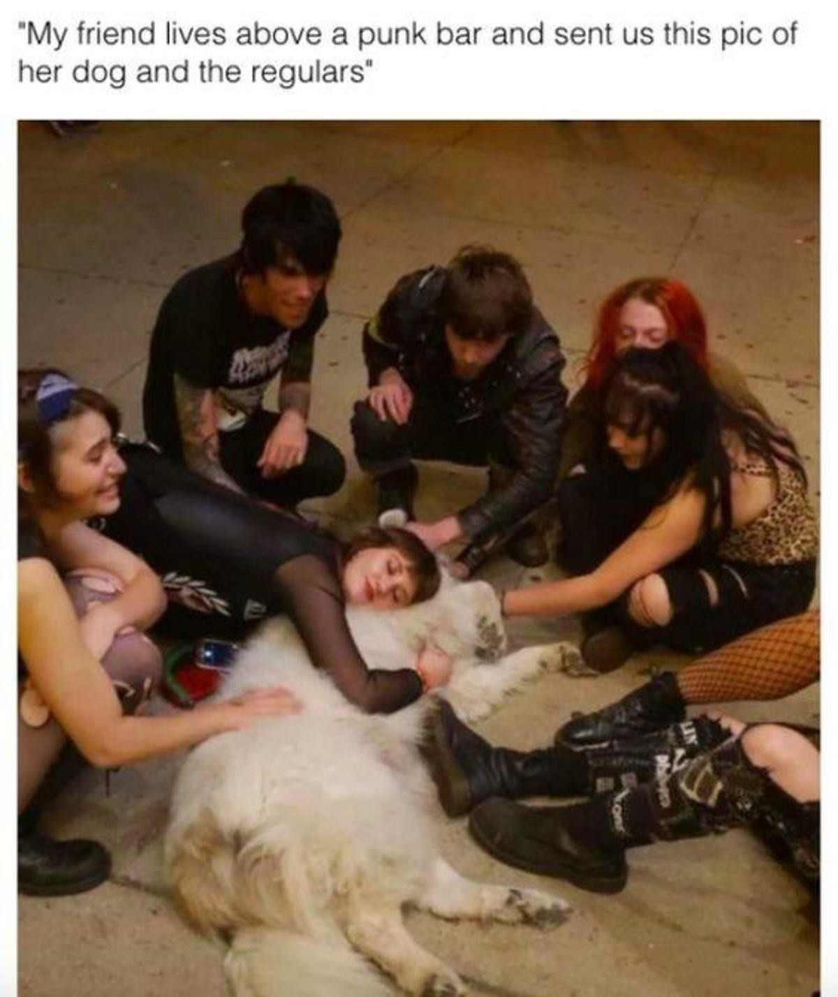 How to get goth GF. .. Nobody's too punk for puppers