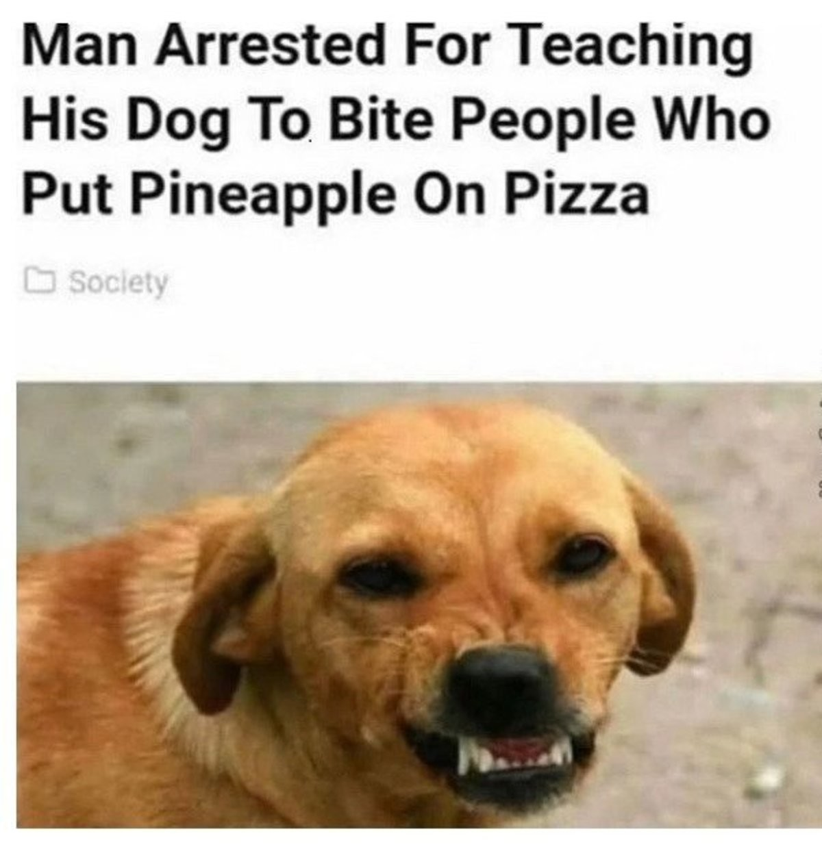 How To Train Your Dog. join list: CuteDogs (233 subs)Mention History. Put Cirri' l, Pizza. Christ, dude, if you don't like it, you don't have to eat any. What authority do you have to say what should or shouldn't be on someone else's pizza?