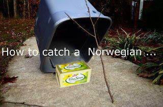 How to catch a Norwegian :'D. Due to the Norwehian butter crysis.. Is...Is that butter? (Yes im norwegian. Now give me that butter.)