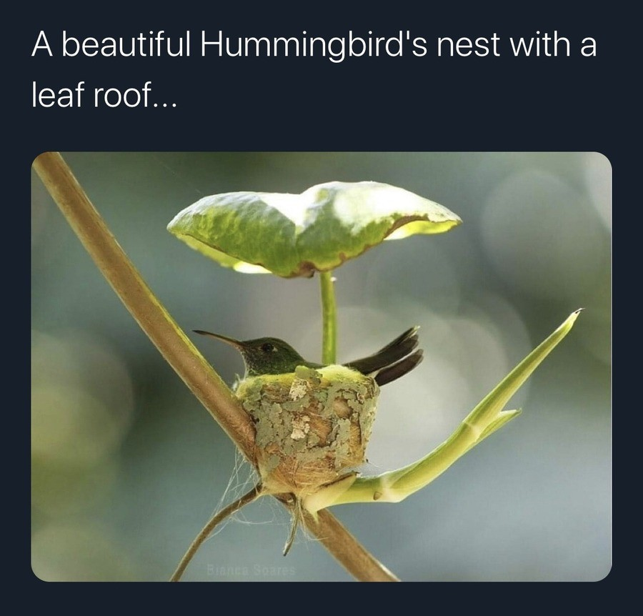 Hummingbird House. .. Some birds with their early morning singing drive me nuts, but for some reason I do love the hummingbirds here. Ive come home from some days at work only to see