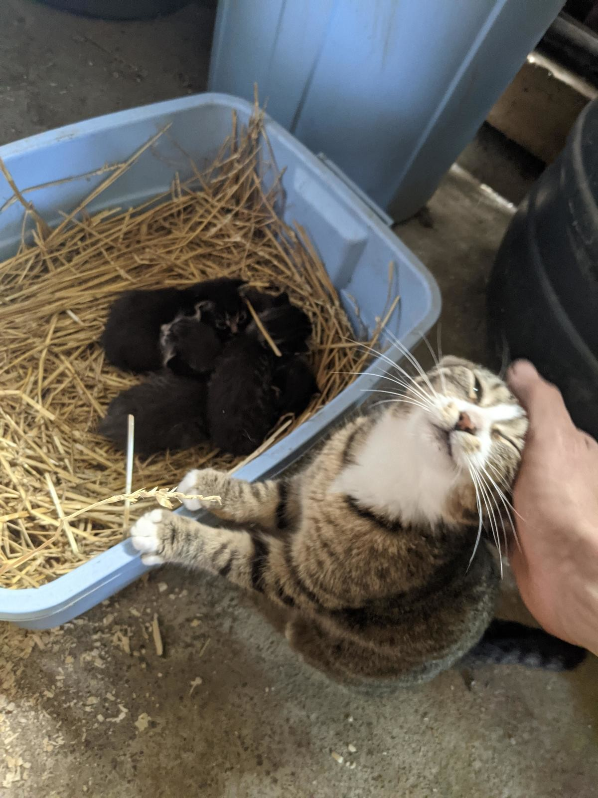 """""""..i made them :3! i'm a good kitty! :3"""". join list: DoseOfCuteness (977 subs)Mention Clicks: 213469Msgs Sent: 3892942Mention History.. why are they black"""