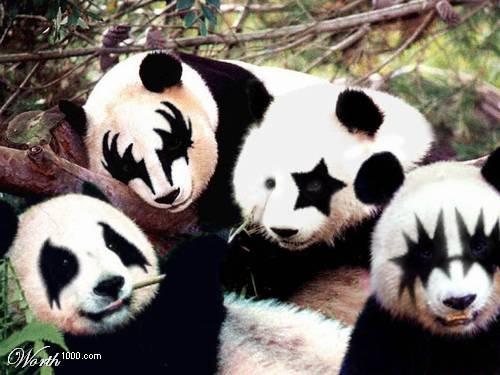 I KNEW IT!. .. HOLY THE PANDA WILL KILL US ALL!!!!!!!! RUN AWAAAYYYY