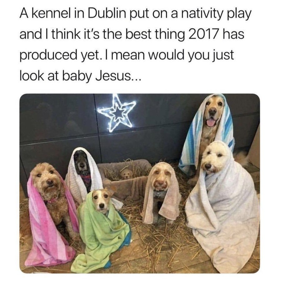 Jesus. join list: CuteDogs (233 subs)Mention Clicks: 4485Msgs Sent: 28713Mention History. pt kennel in Dublin put on a nativity play and I think it' s the best