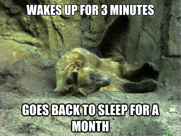 Lazy Bear. .