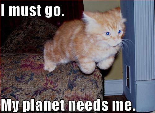 LOL cats 5. thumb's up for cuteness =3.. DA...DADADAAAAAAAA!!!!!!!