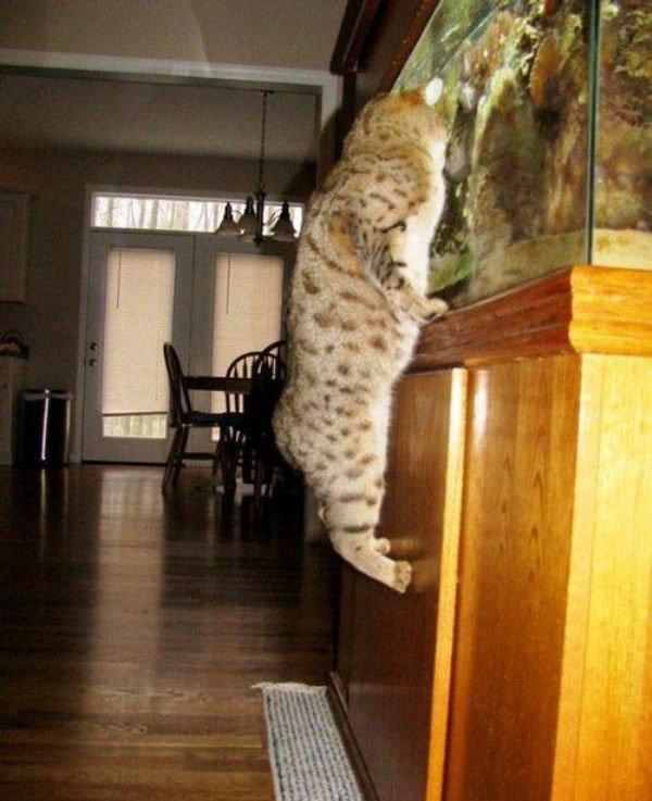 Lol Cat. Lol cat .