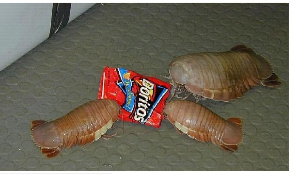 Look at that floor!. Freakin A yes!.. MUTANT...........WHATEVER THE THEY ARE'S!! RUUUUNNN!!! (But not before getting those Doritos!)