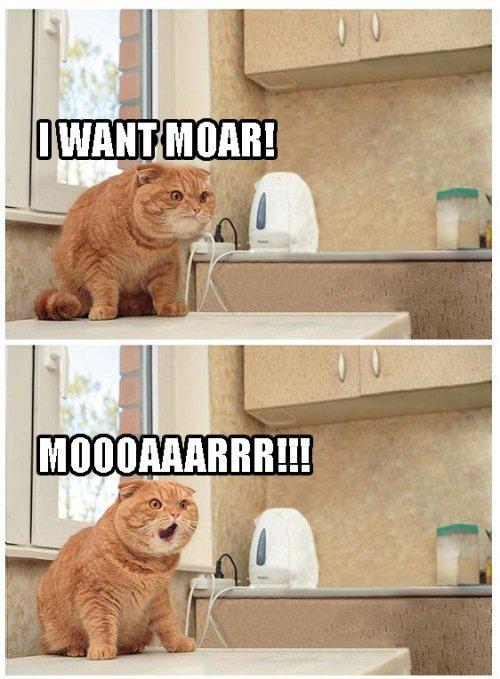 Moar. kitteh wants moar!.. can we not spell more correctly?