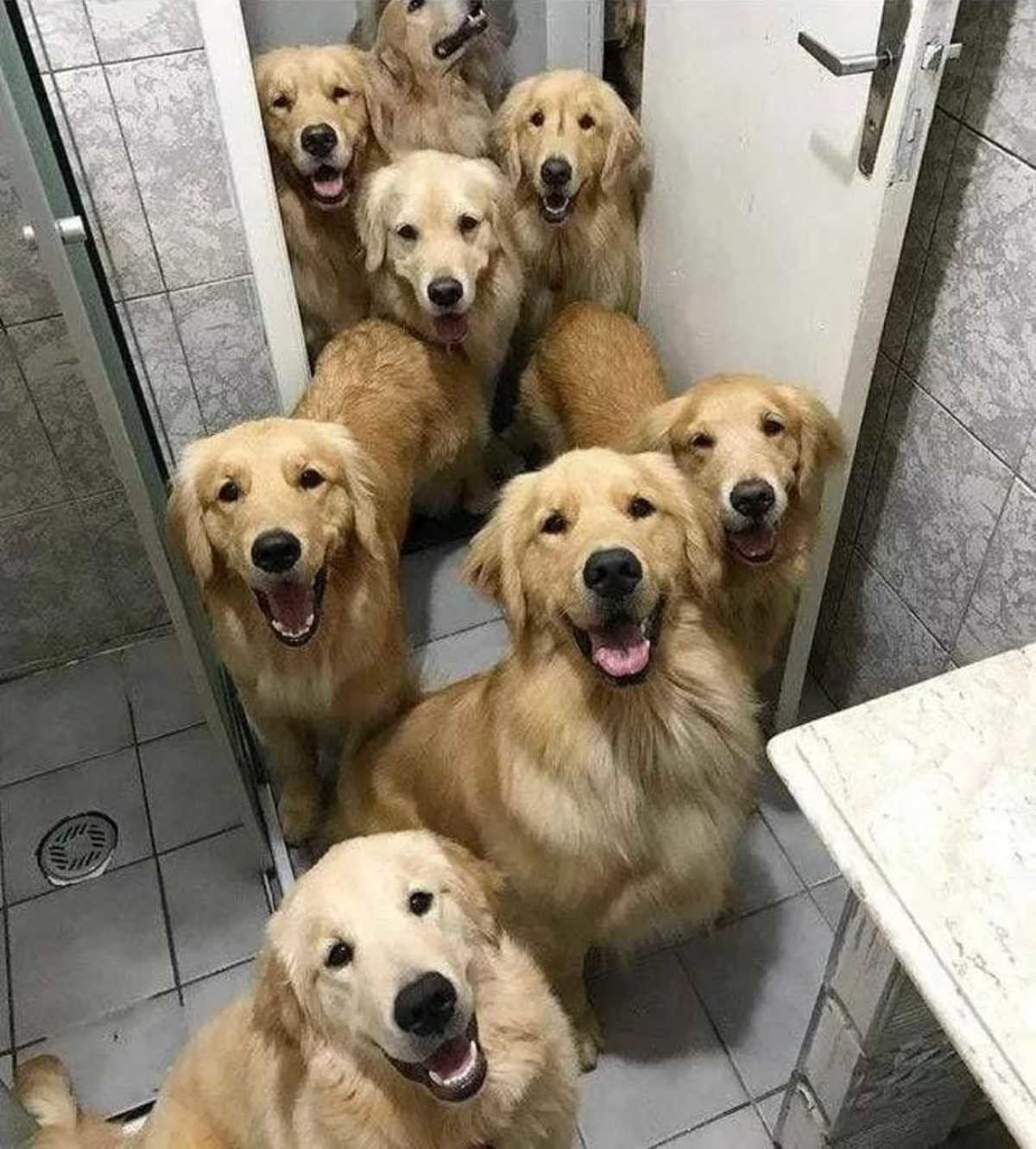 Need any help in here? :3. .. Dogs are great. So kind and sweet