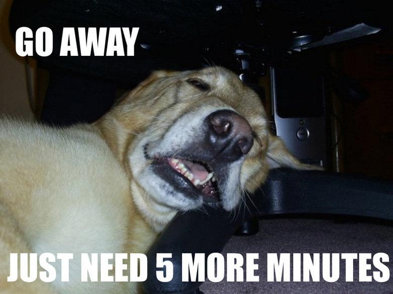 need moar sleep. my lazy ass dog.... shut up..