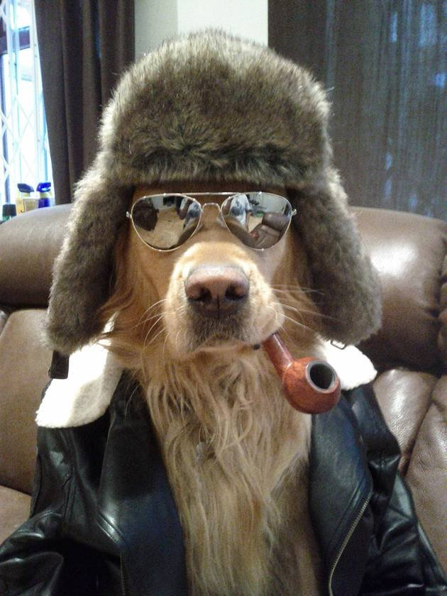 No dog will ever be this awesome. Found a while ago.. This dog!
