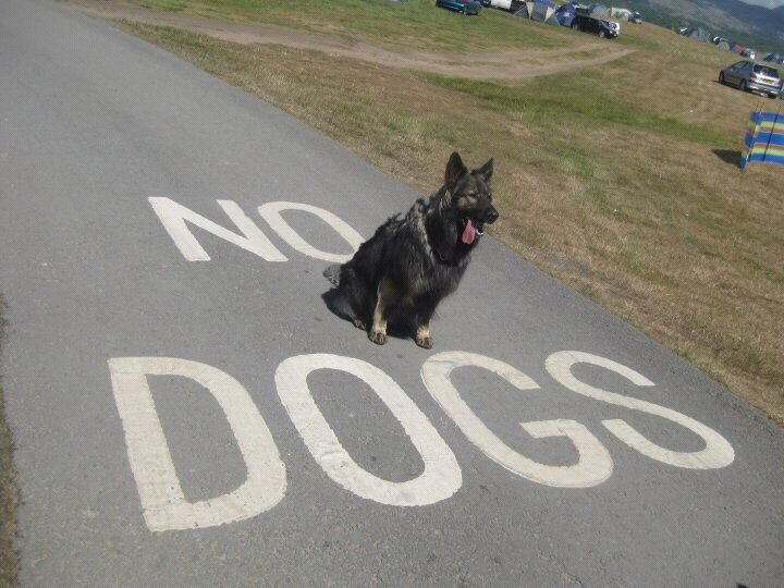 no dogs. .