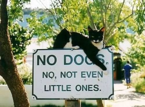 no dogs. .. What dog? I don't have any dogs here.