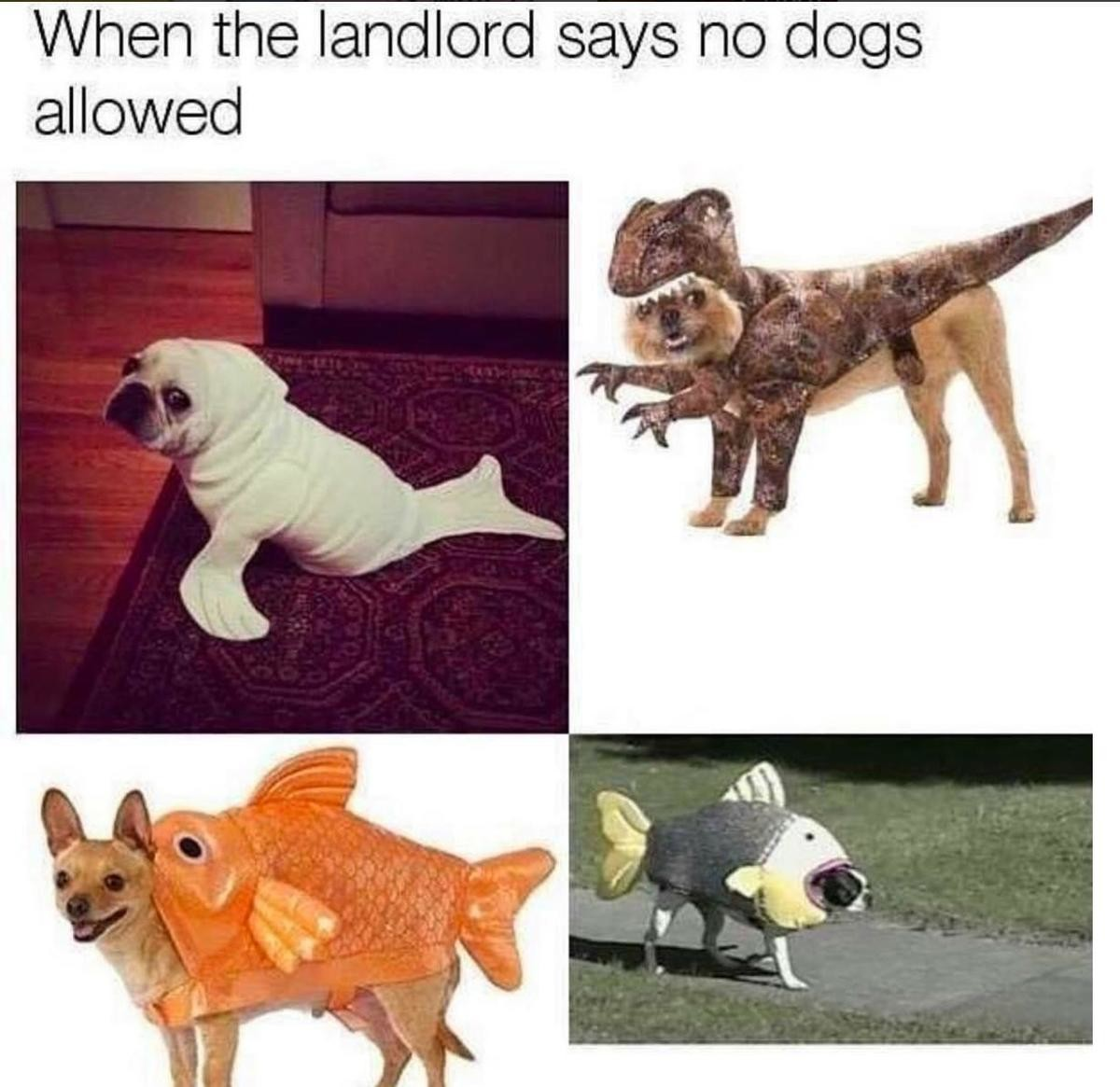 No dogs. . When , l! landlord no '. I once almost had the perfect apartment 3 bedroom, 2 bath, huge closet decent rent there was a playground community yard with picnic gazebo. suddenly landlord s