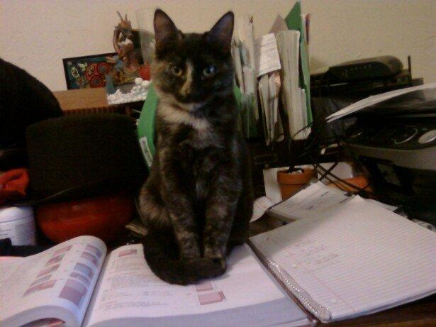 No do homework. Petz me eensted..