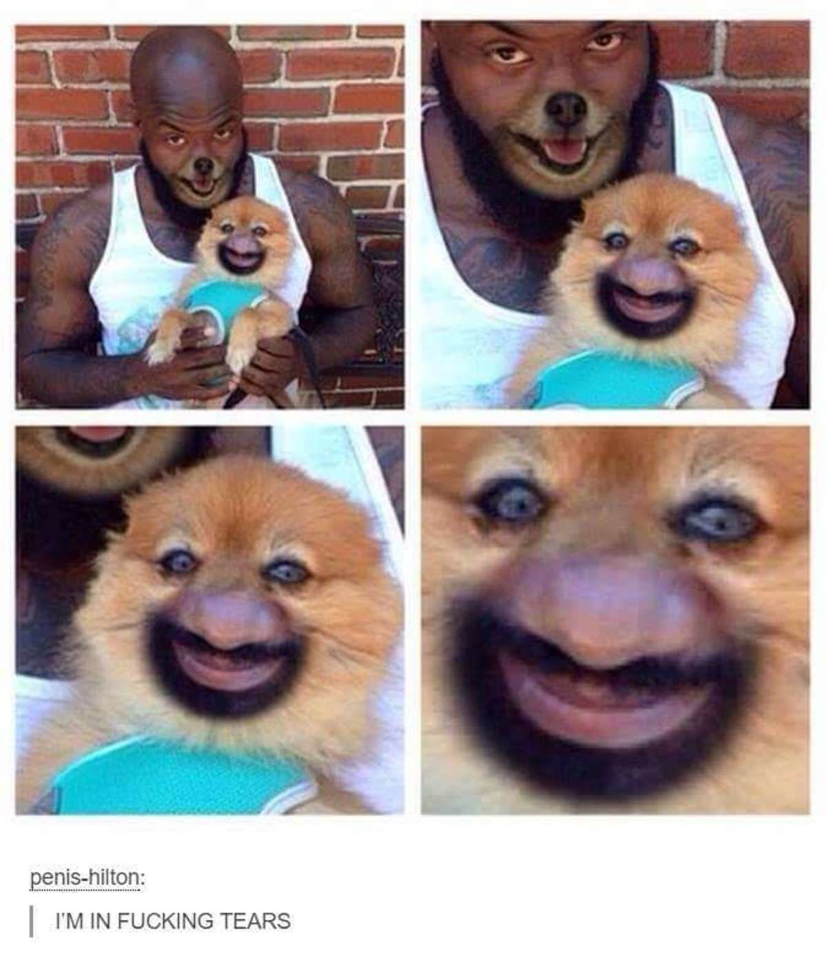 """Nose Swap. . tili. I' M """"' FUCKING TEARS. the owner looks like a disney character"""