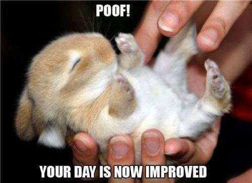 poof!. enjoy,[:. mun BAY IS 'iii' emmas. Your day is further improved.