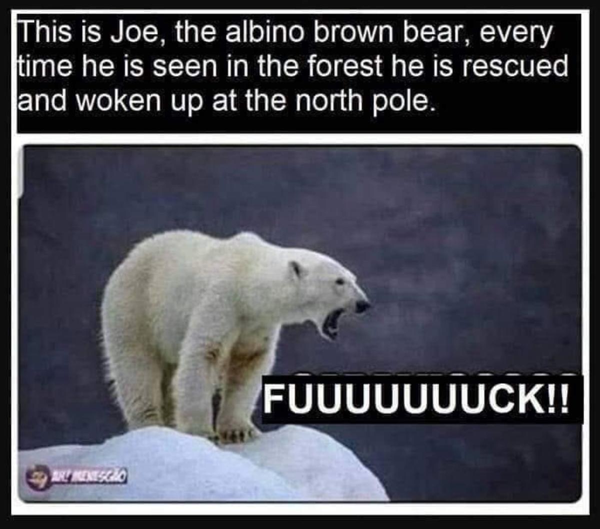 poor Walrus. .