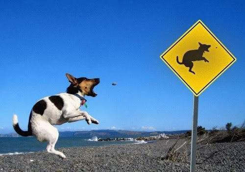 Precise sign. .