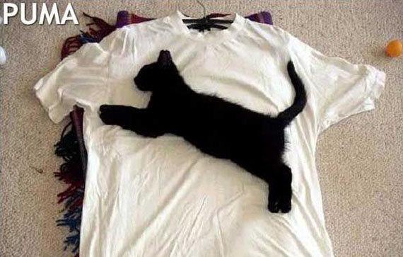 Puma Kitty. Look at the tags.