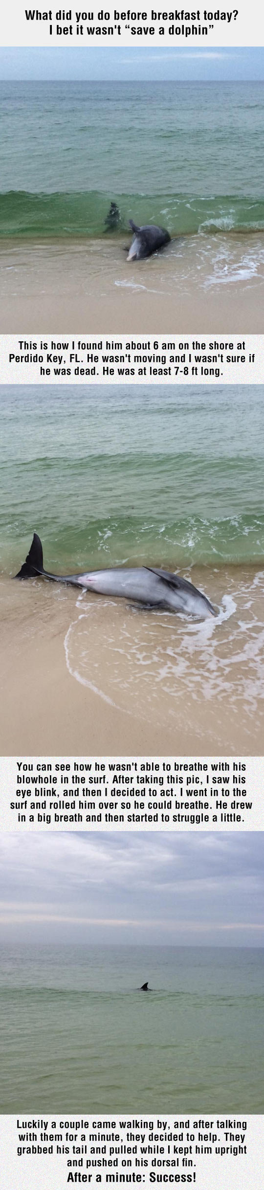 """Rescuing A Dolphin. Rescuing A Dolphin . what did you do before breakfast today? I bet it wasn' t """"save 'ii' dolphin"""" This is how I found him about y, am oaths"""