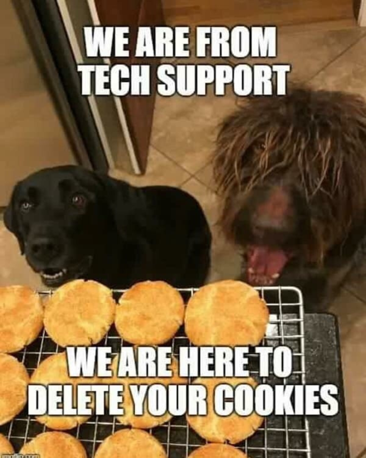 runtime Gamers. .. Why is Tina Turner begging for cookies.